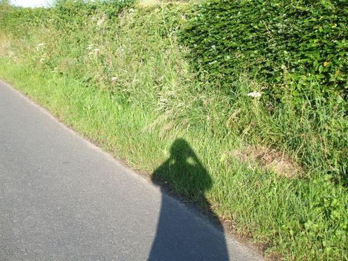 Shadow 16