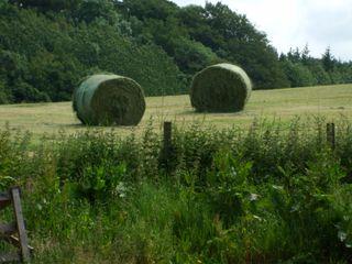 Hay cut